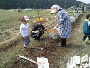 ブロッコリー畑5
