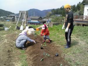 ブロッコリー畑4